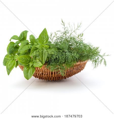 Fresh spices and herbs in wicker basket isolated on white background cutout. Sweet basil leaves, dill.