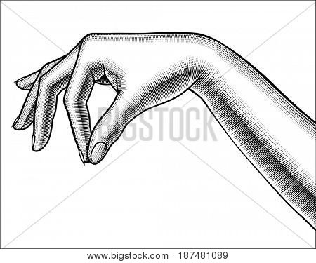 Contour of woman's hand palm down with pinch fingers. Retro design element. Vintage engraving stylized drawing