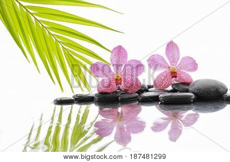 stacked black stones and bamboo leaf with orchid on wet background