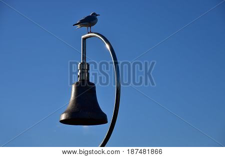 The scenery of bells and birds in the blue sky park