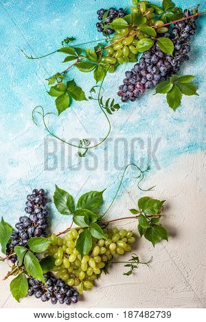 Still life of various types of grapes with leaves. Top view