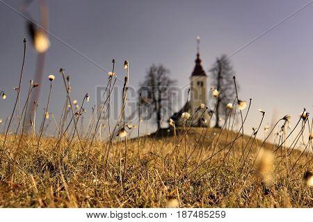 The church of Saint Thomas in Slovenia blurred behind grass.