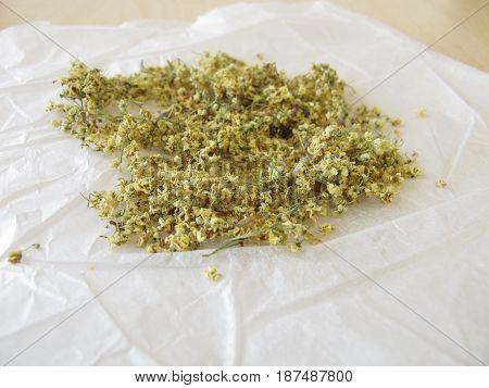 Elderflowers to dry on white paper for tea