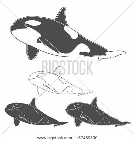 Set of black and white killer whale images. Isolated vector objects on white background.