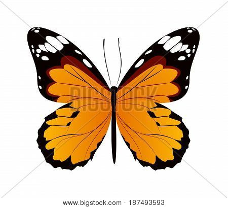 Isolated beautiful butterfly on white background. Orange colors.