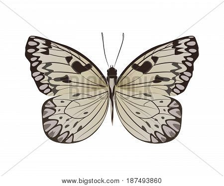 Isolated beautiful butterfly on white background. Grey colors.