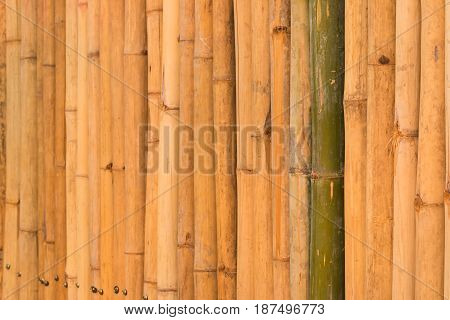Wall of home made of bamboo in Thailand