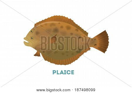 Isolated plaice fish on white background. Exotic wild fish.