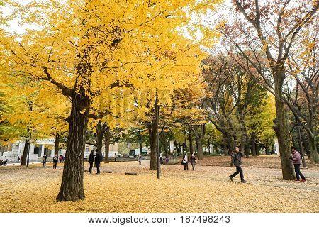 people at the ginkgo park in autumn season taken in Tokyo Japan on 6 December 2016