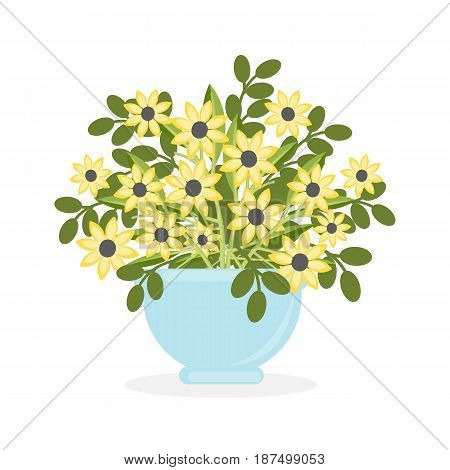 Flowers in pot on white background. Yellow flowers.