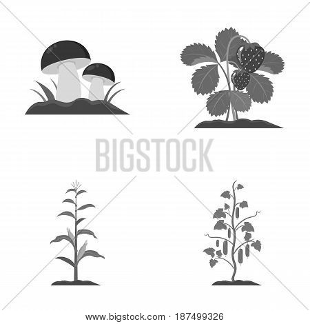 Mushrooms, strawberries, corn, cucumber.Plant set collection icons in monochrome style vector symbol stock illustration .