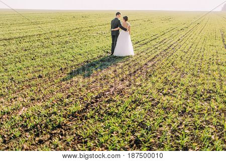The back view of the walk of the newlyweds in the field