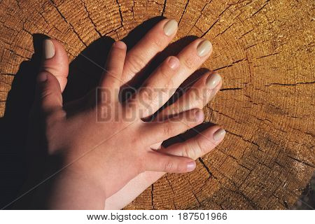 Female and child's hand located on old stump. Natural wooden background. Succession of generations, family concept.