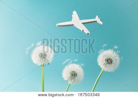 Dandelion flowers and white airplane silhouette in blue sky. Travel, summer vacation, aviation and air flight concept.