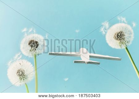 Dandelion flowers and airplane model in blue sky. Travel, summer vacation, aviation and air flight concept.