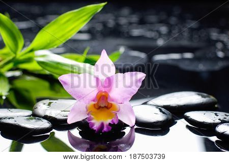 Beautiful orchid with bamboo leaf and therapy stones