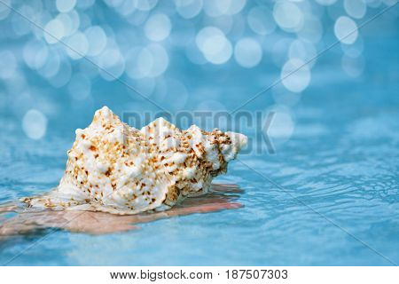 tropical seashell in child hands with crystal blue water background, shallow dof