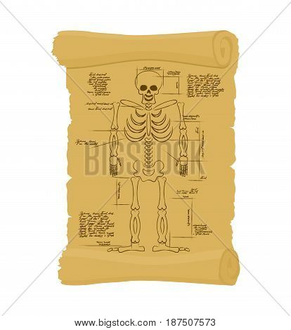Ancient scroll of skeleton. Archaic papyrus of anatomical Structure of man. Old scheme. Secret Invention of Leonardo da Vinci. Vintage document