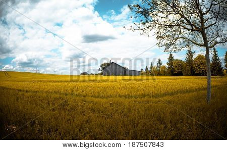 Wooden barn in the middle of a yellow field