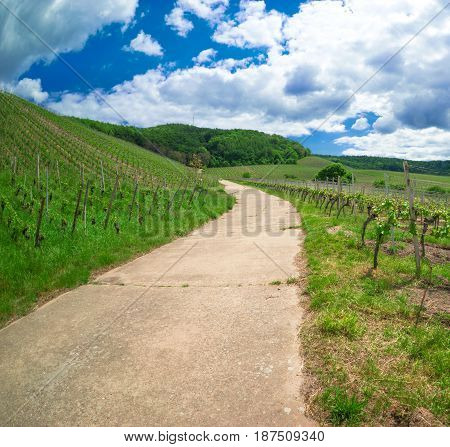 Vineyard dirt road leads into a forest