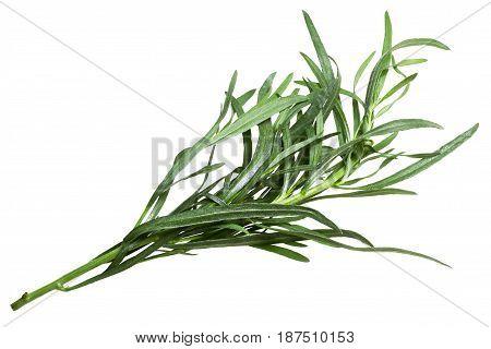 French Tarragon Artemisia Dracunculus, Paths