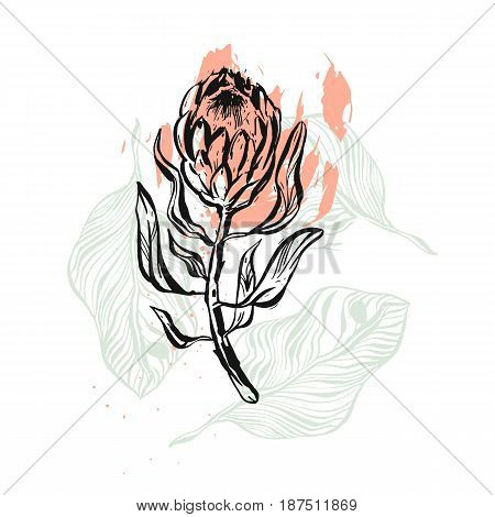 Hand drawn vector graphic abstract floral illustration of ink protea flower isolated on white background.Design decoration elements for greeting, save the date, birthday cards.