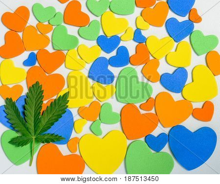 cannabis lies on a background of colorful hearts