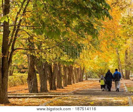 Autumn in the city Park the city of Saratov, Russia. Chestnut Avenue