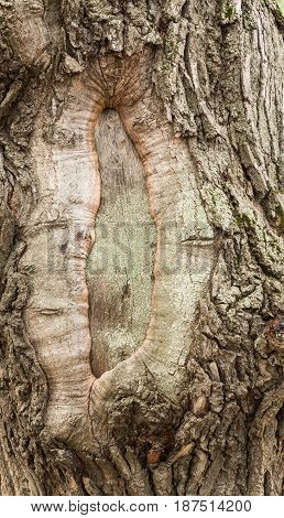 Gnarled trunk of an old tree. Textured background