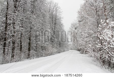 Winter forest in the European part of Russia