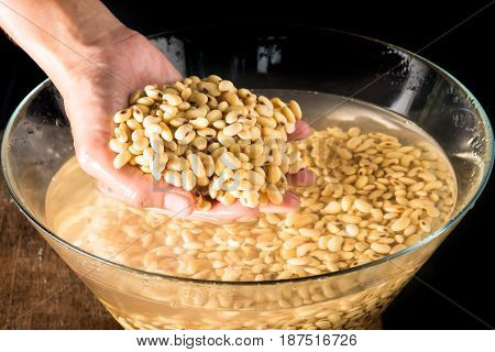 Soybean or Glycine max in hand and soak in water 3 hour be for make soy milk.