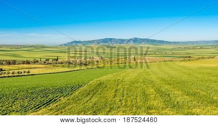 View at the nature near ruins of Volubilis in Morocco