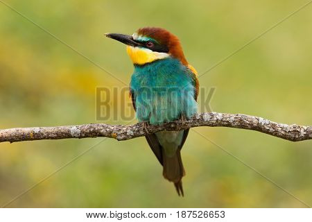 Portrait of a colorful bird looking at side