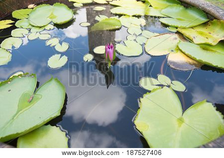 The reflection of the water between the lotus and cloud and the old cement in the lotus pond.