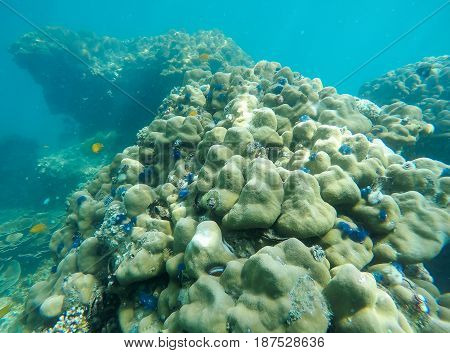 Soft focused photo of Coral and fish at Zedetkyi Island Andaman oceanMyanmarAsia