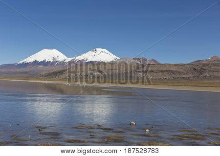 The Sajama National Park In Ranger Of Bolivia-