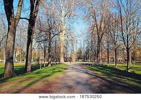 Park With Old Big Trees