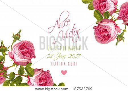 Vector wedding invitation card with garden rose flowers on white background. Can be used as floral design for natural cosmetics, perfume, health care products. and greeting cards