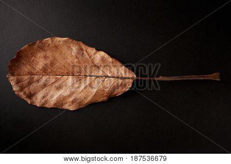 Brown oval Autumn leaf on black background, horizontal