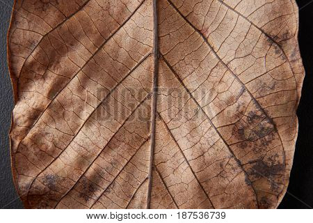 Full frame brown Autumn leaf