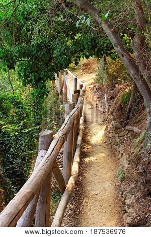 Foothpath Through The Forest