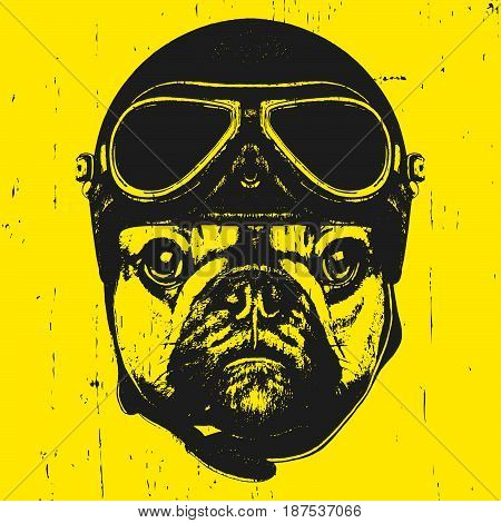 Portrait of French Bulldog with Helmet. Vector