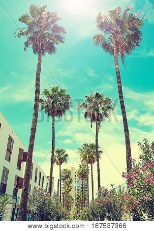 Beautiful View Of Architecture And Palm Trees On Blue Sky Background
