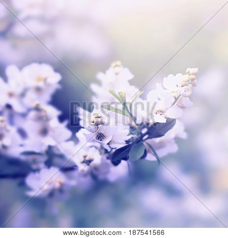 White Flowers On Branch