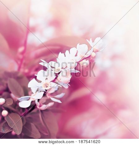 Flowers At Blossoming Tree