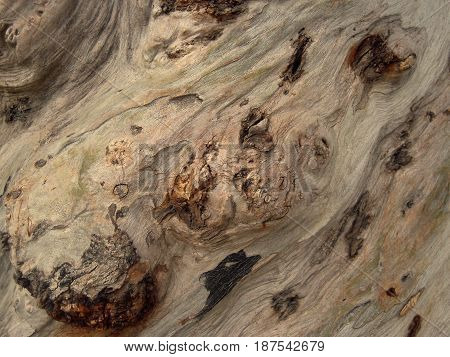 Bark surface of old tree, nature background