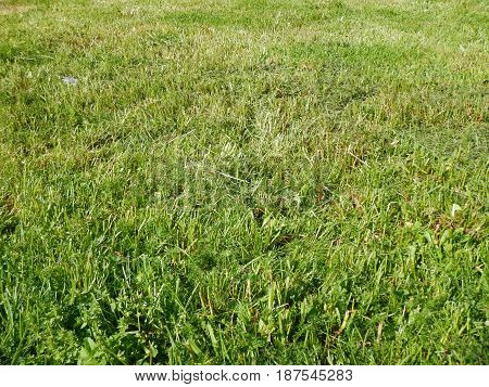 Green Grass On A Meadow With Plants