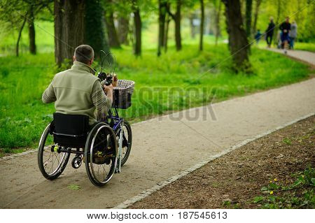 The man in a wheelchair on walk in the spring park. In a luggage carrier a small doggie. View from a back.