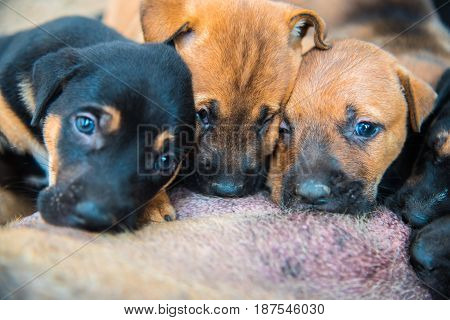 Group of colorful newborn puppies sucking milk from bitch