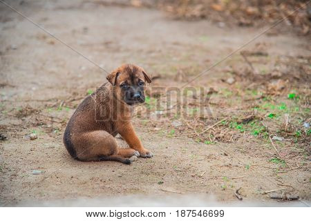 A portrait of a cute puppy sitting on the ground